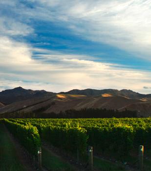 Weingut Mount Nelson