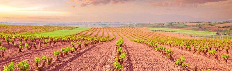 Vinos de Espana_Weingarten