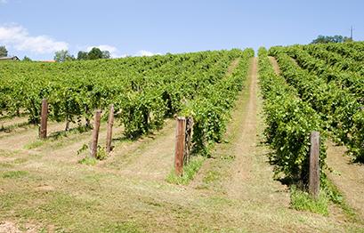 Weingut Reiterer - Rebanlagen