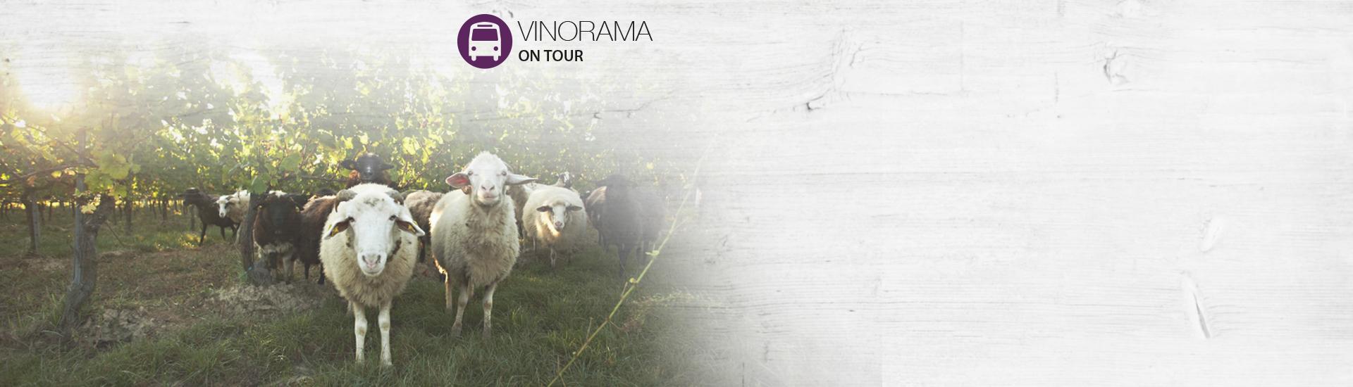 Weine - Vinorama on Tour: Weingüter Loimer, Landauer-Gisperg & Weninger 08/2016 - Slider