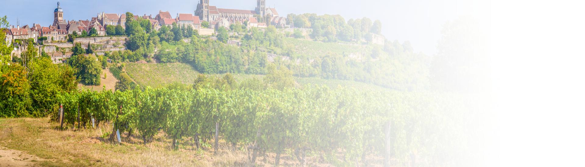 Weine - Auf ALLE Weine aus dem Burgund -20%! 02/2017 - Slider