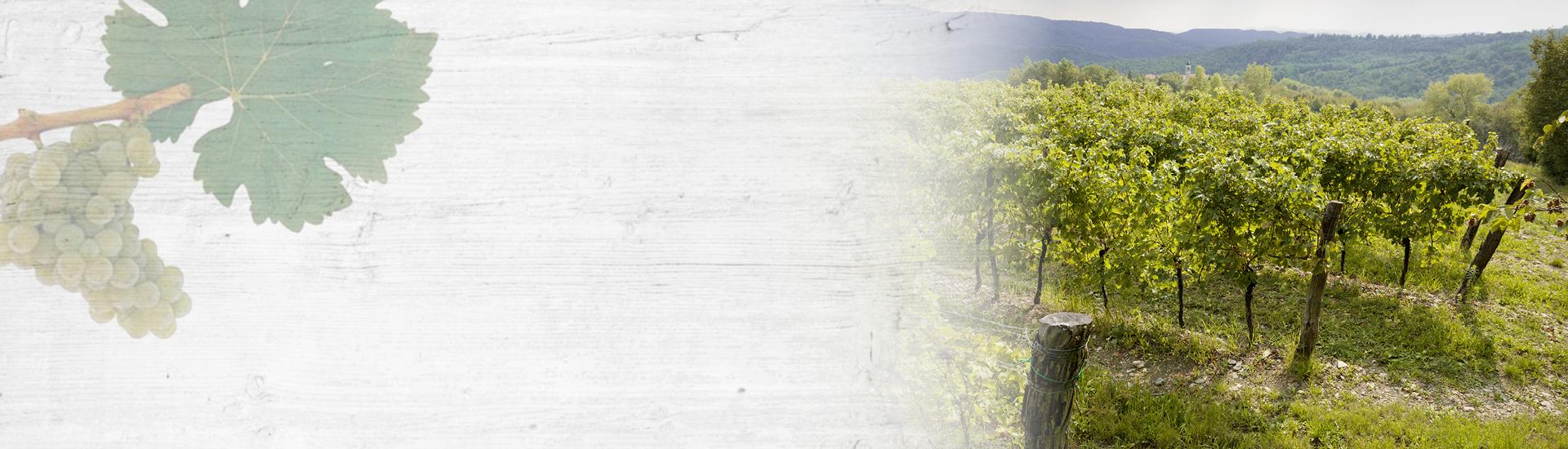 Weine - Vinorama on Tour - Sauvignon Blanc 08/2017 Slider