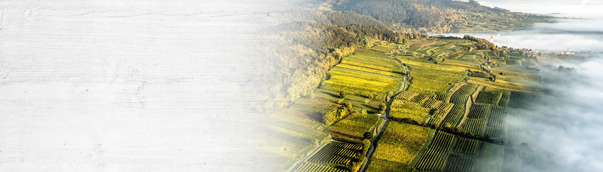 Weine - Vinorama on Tour: DAC-Weine aus dem Kamptal, Kremstal & Traisental 09/2017 - Slider