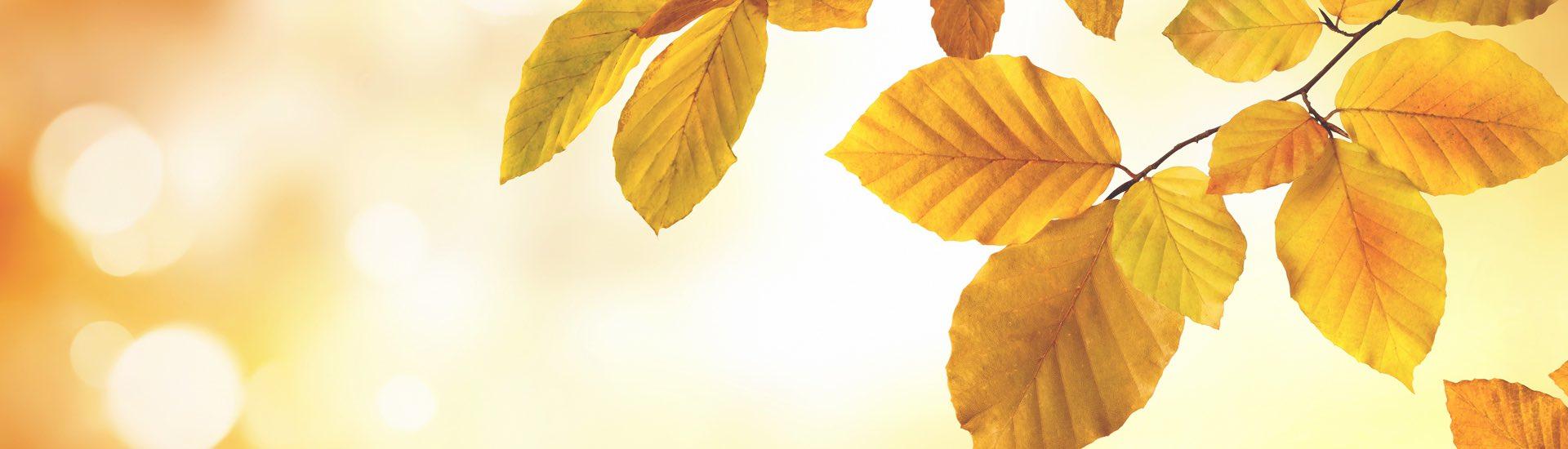 Weine - Vinorama Bestseller zu Top-Preisen! 10/2017 - Slider