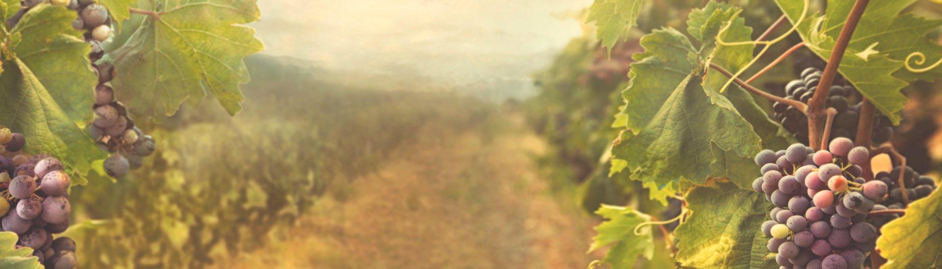 Weine - Weinpakete für den kulinarischen Herbst 10/2017 - Slider