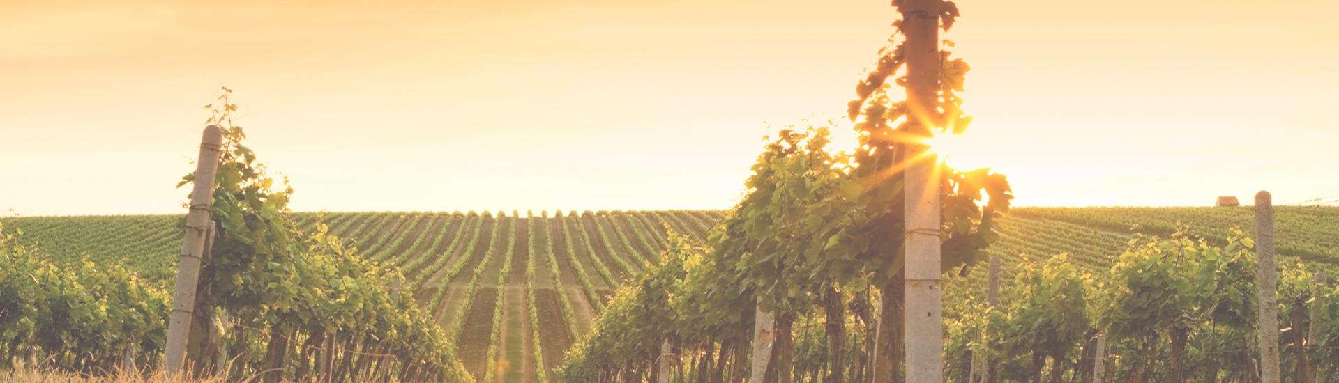 Weine - Weinviertel DAC - Top-Jahrgang 2016 bis -18%! 01/2018 - Slider