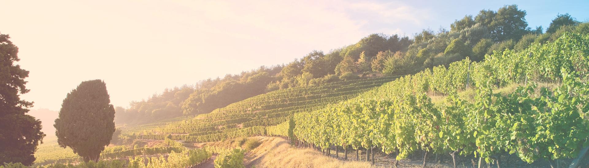 Weine - Bordeaux 2015 und Jahrgangsvielfalt bis -20% 05/2018 - Slider