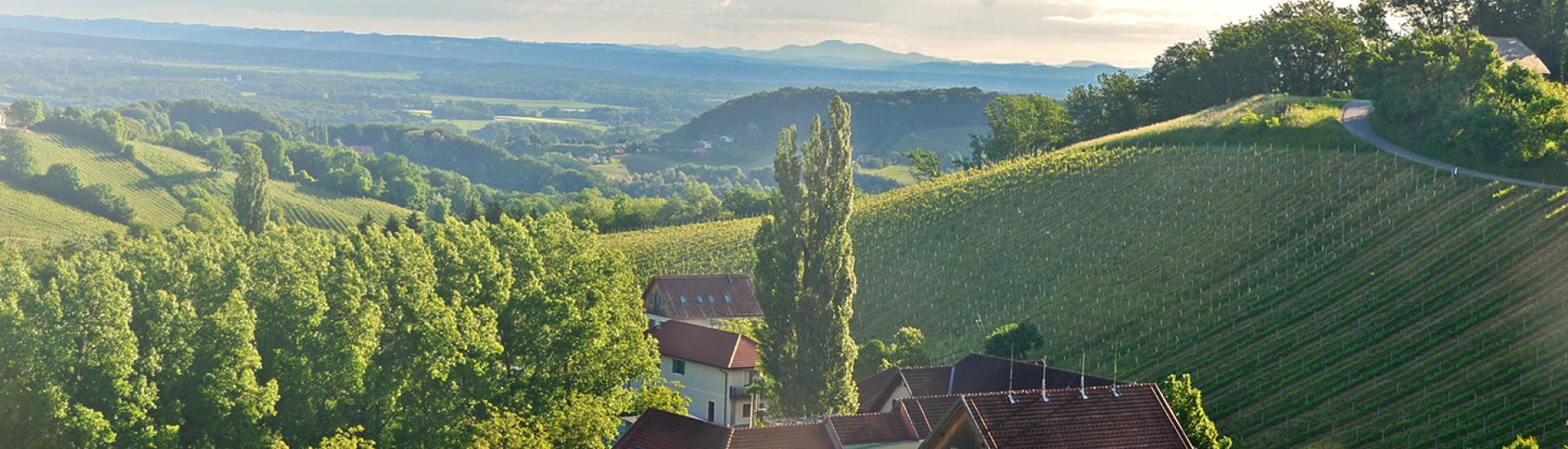 Weine - THERESE is back! Kultwein vom Weingut Polz wieder erhältlich! 05/2018 - Slider