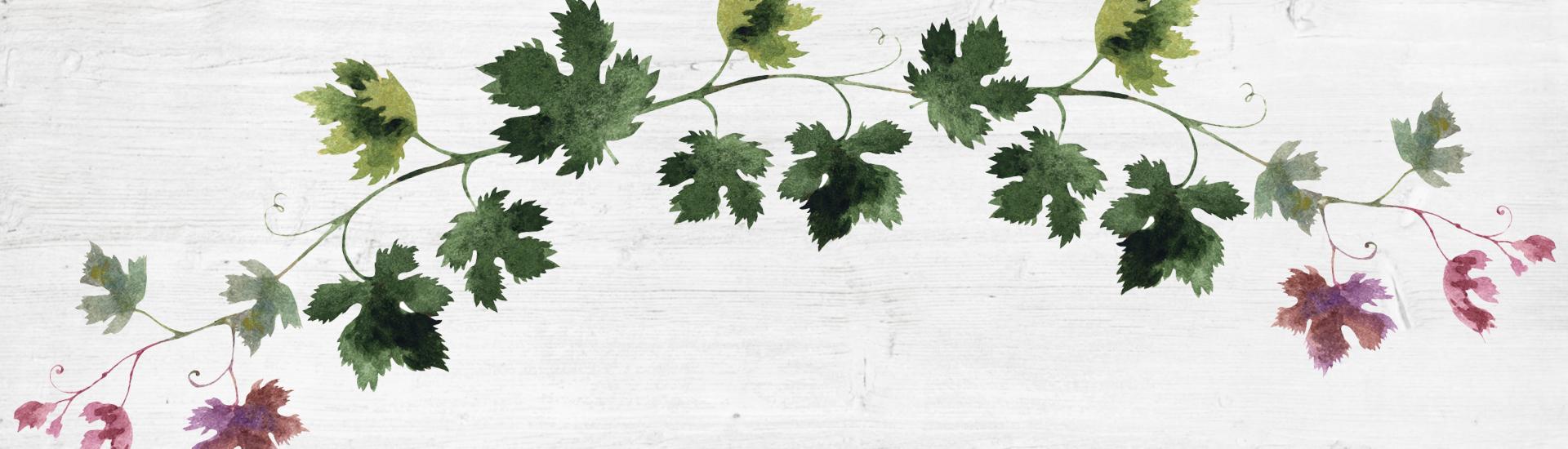 Weine - Vinorama on Tour: Weißweinvielfalt abseits des Gewöhnlichen 05/2018 - Slider