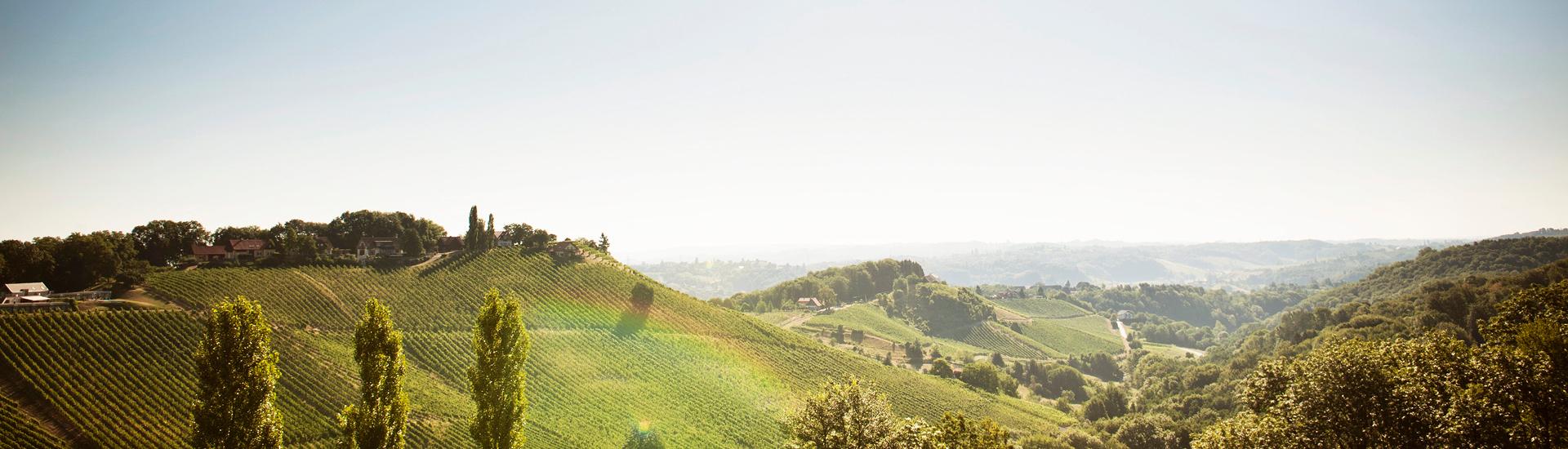 Weine - Rarität des Monats: Sauvignon Blanc Hochgrassnitzberg 2011 06/2018 - Slider