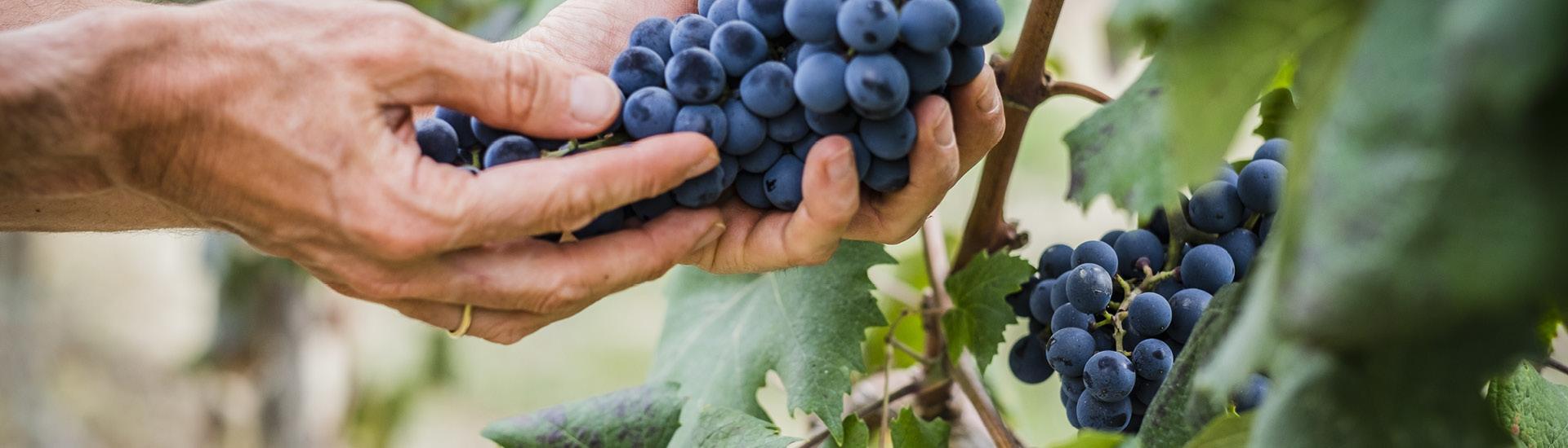 Weine - Weinjahr 2018 - ein Jahr schreibt Geschichte! 02/2019 - Slider