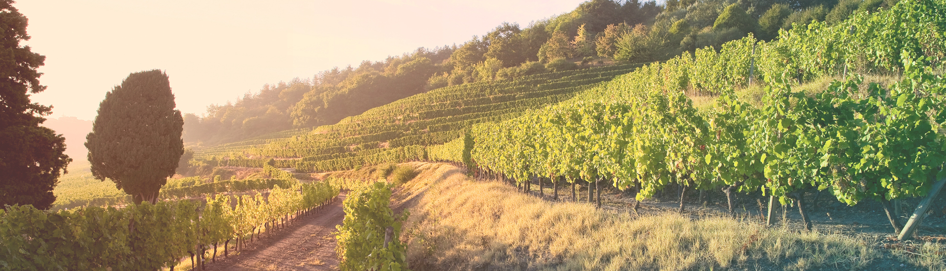 Weine - Bordeaux-Weine aus dem Top-Jahrgang 2015 03/2019 - Slider