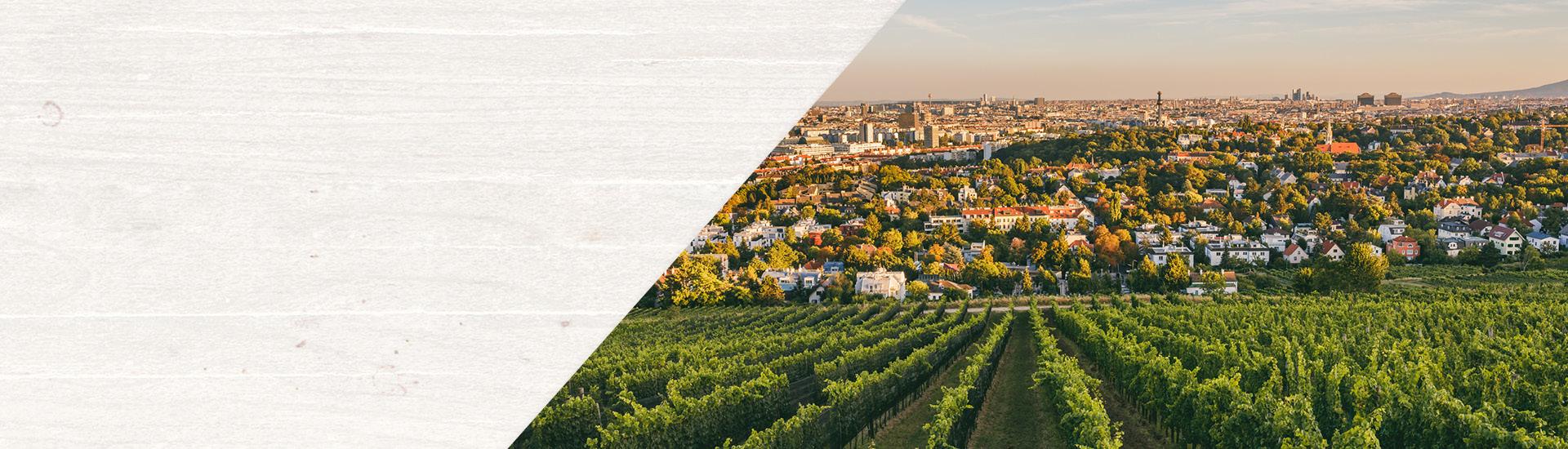 Weine - Vinorama on Tour: Wien und Wein 08/2019 - Slider