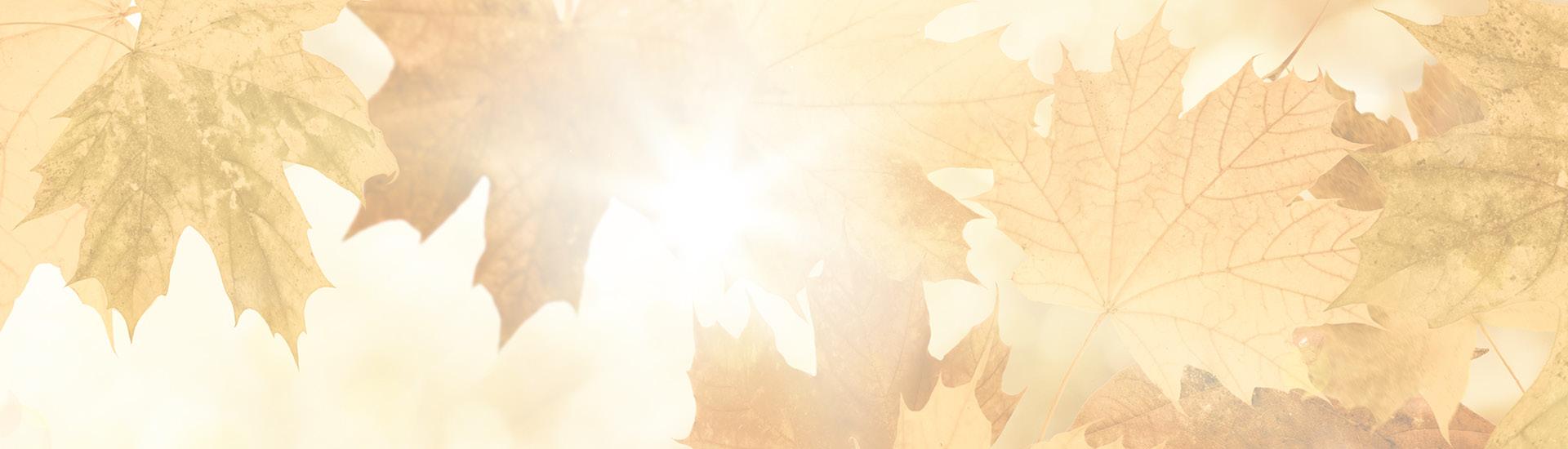 Ein Riedel Dekanter 'Syrah Magnum' GRATIS ab einem Bestellwert von 349,-! 10/2019 - Slider
