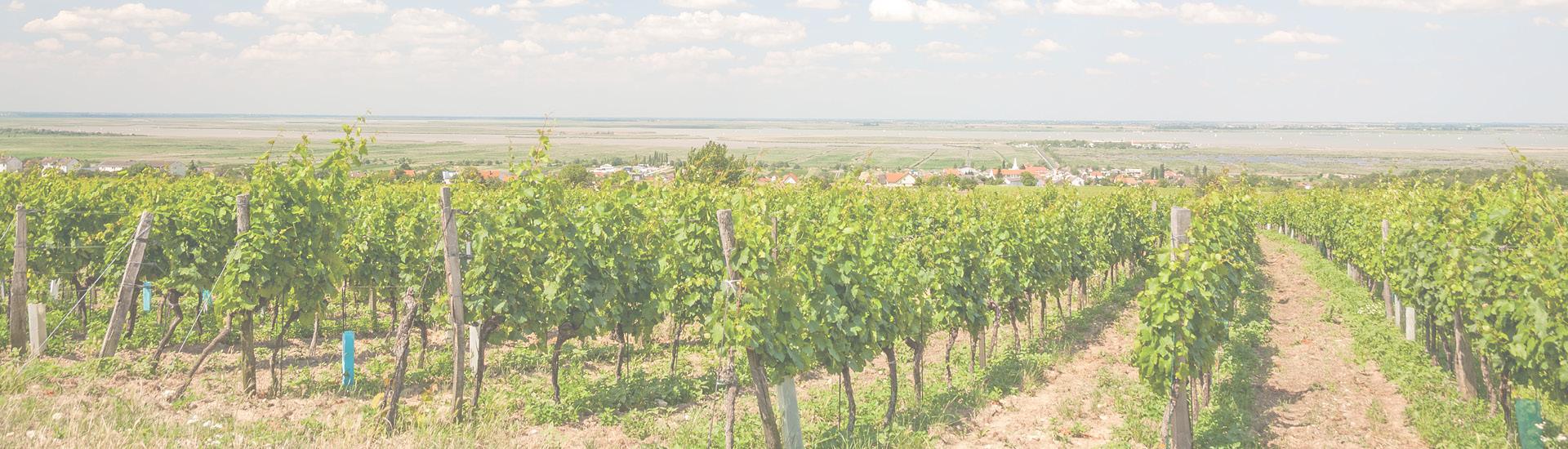 Weine - Auf ALLE lagernden Weine aus dem Mittelburgenland -20% 05/2020 - Slider
