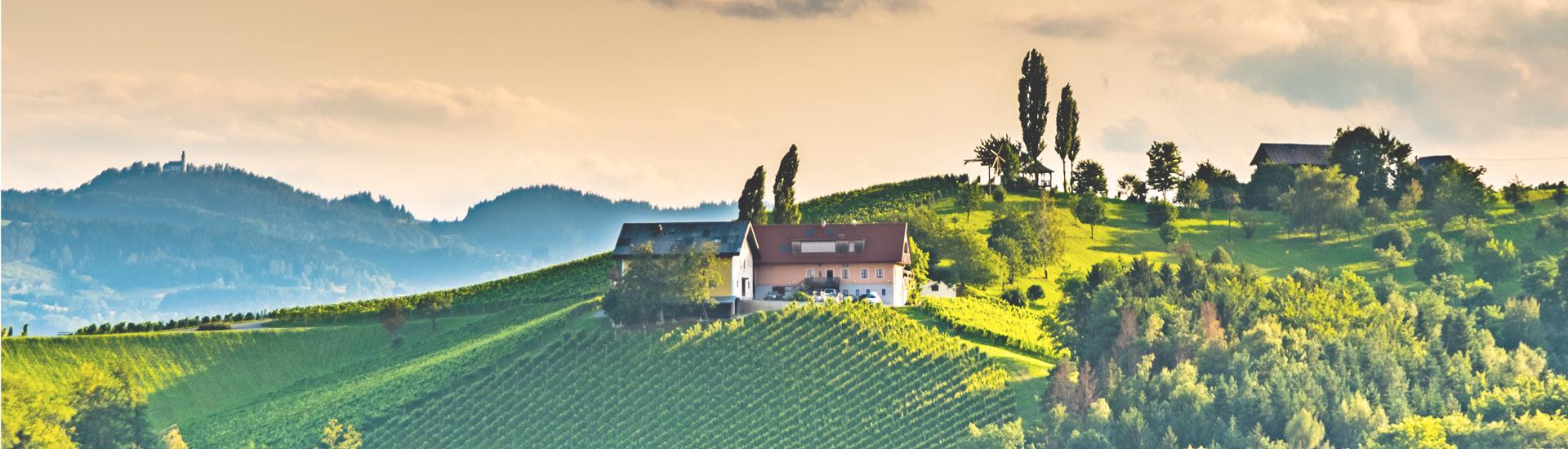 Weine - Auf ALLE lagernden Weine & Schaumweine der Steiermark 20% Rabatt 03/2021 - Slider