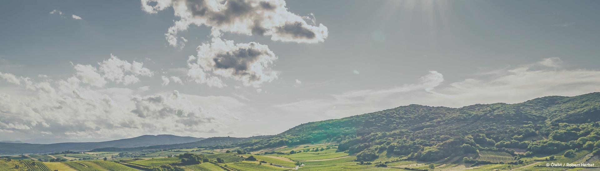 Weine - Vinorama on Tour: Die 7 Elemente der Spannung 05/2021 - Slider